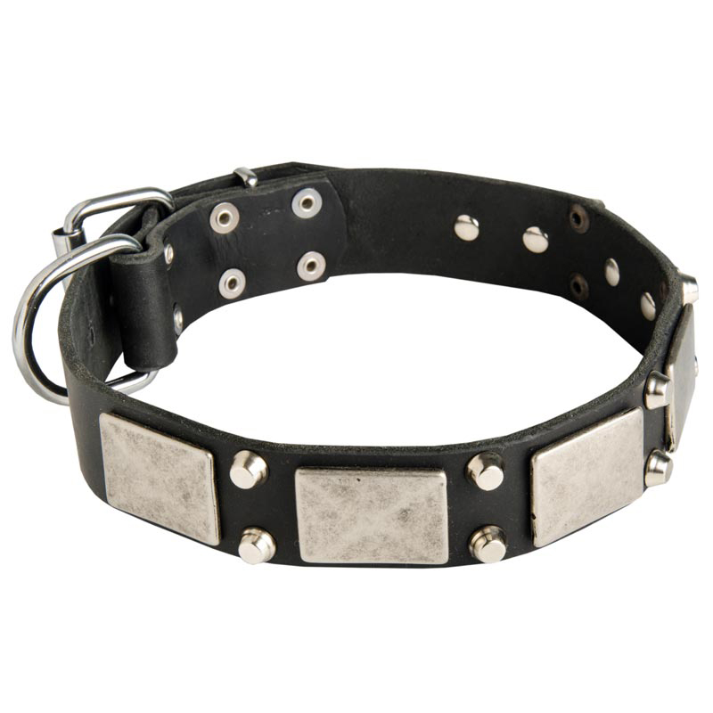 Vintage Leather Dog Collar with Nickel Plates and Cones for Rottweiler
