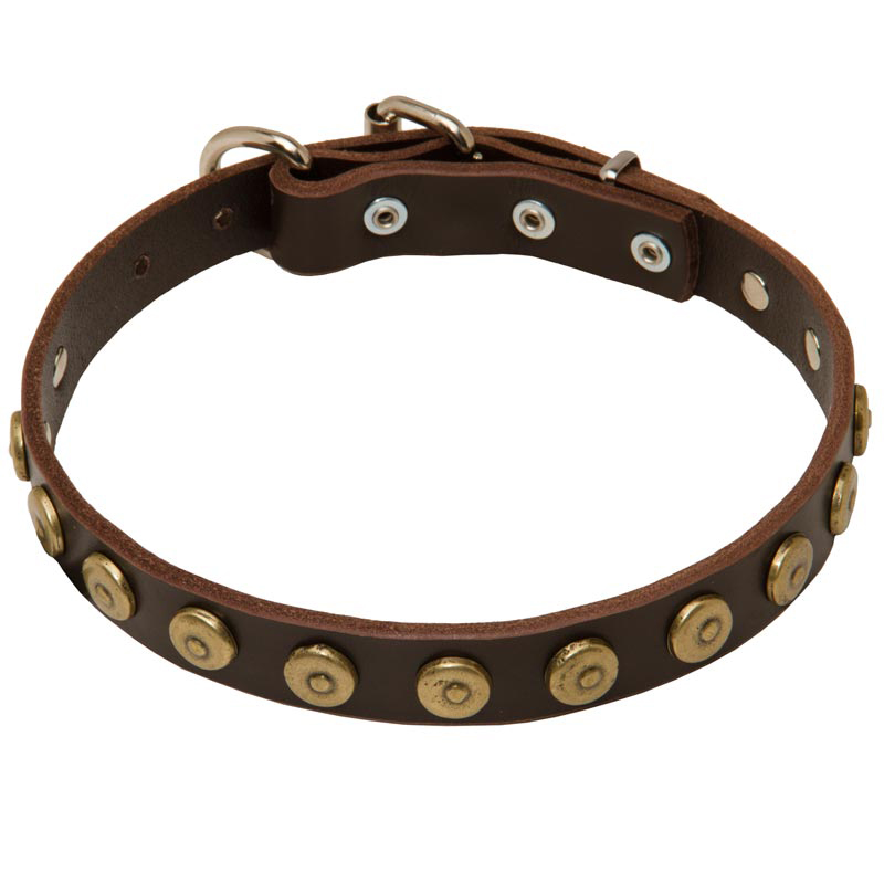 1 Inch Gorgeous Leather Rottweiler Collar with Dotted Brass Circles