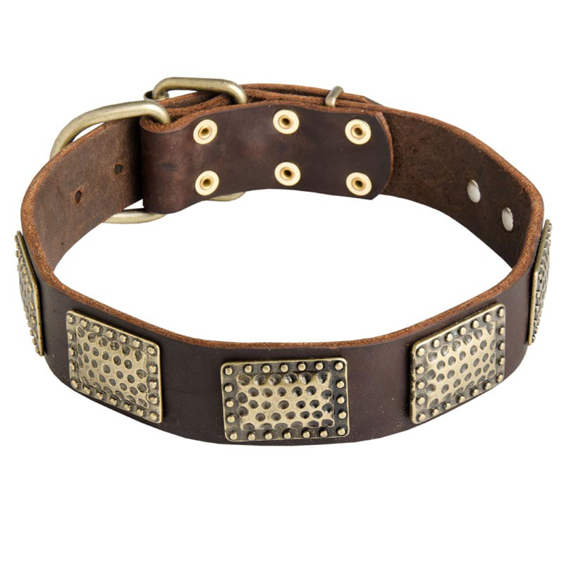 War Design Leather Dog Collar with Vintage Brass Plates for Rottweiler