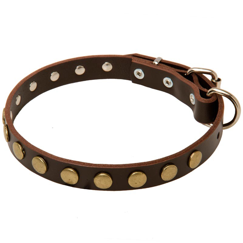 1 Inch Wide Leather Rottweiler Collar with Brass Circles