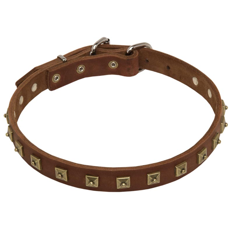1 Inch Studded Leather Rottweiler Collar for Everyday Walking